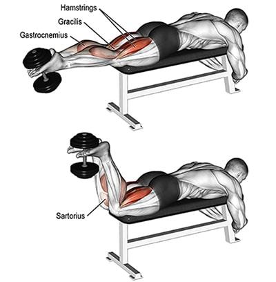 حرکت پشت پا با دمبل بدنسازی