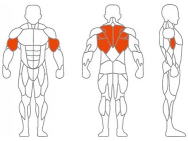 عضلات درگیر در حرکت زیر بغل اچ